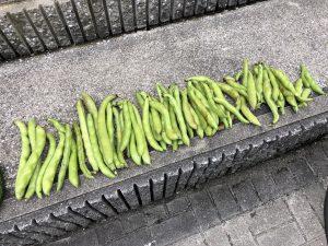 サラダそら豆